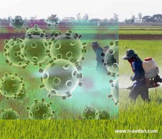 Investigating the Agroeconomic                           effects of the Coronavirus